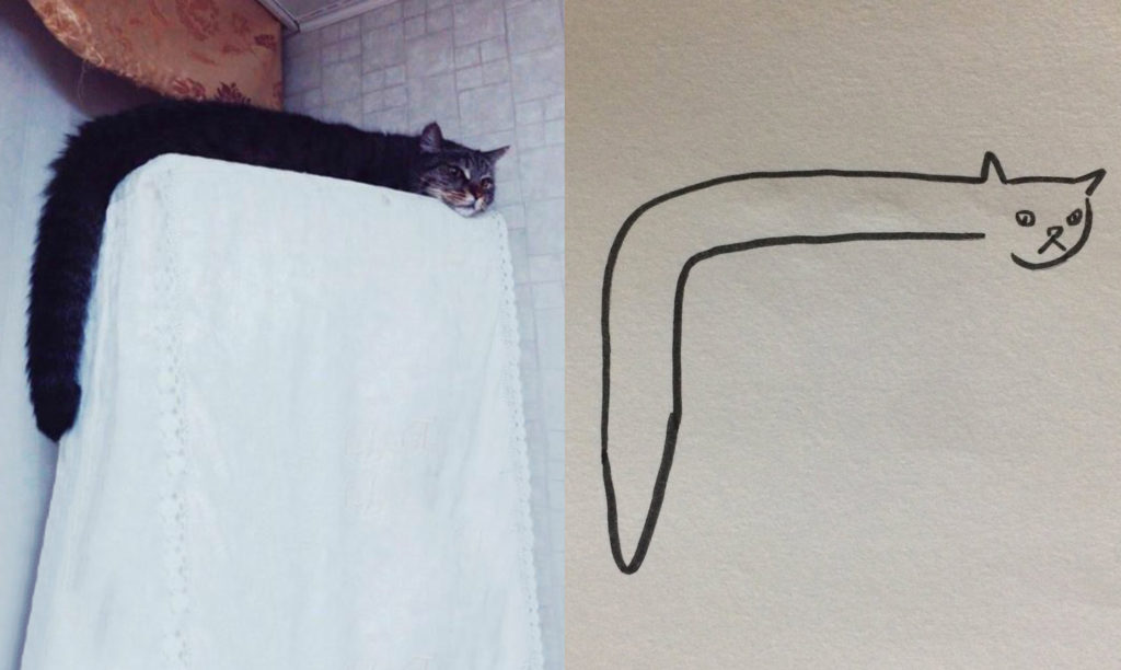 how to draw a funny cat