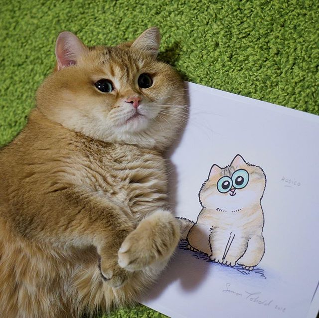 Hosico drawing by Simon's Cat.