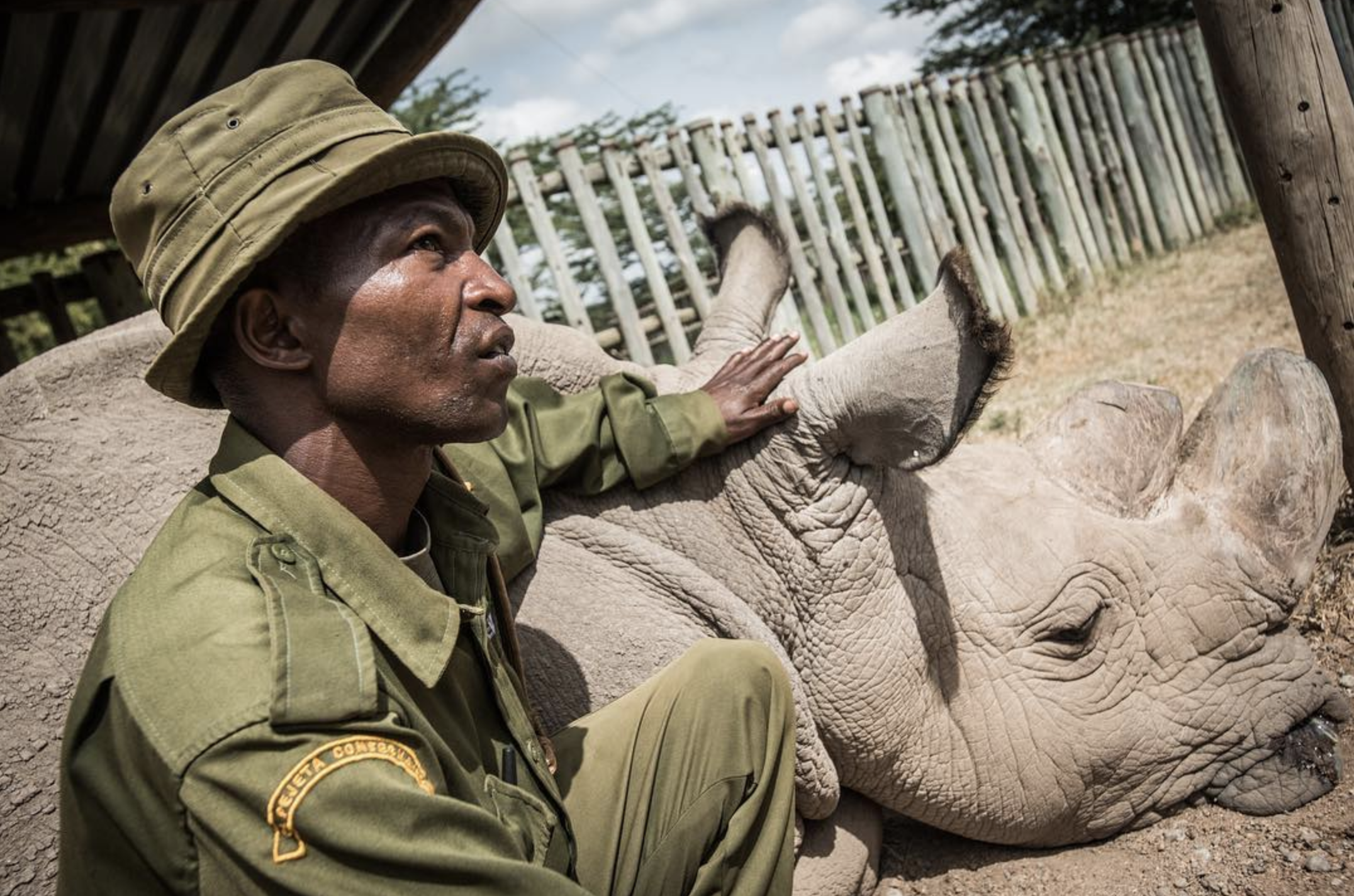 The Years Project - Northern white rhino.